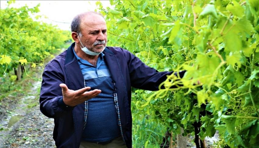 Manisa'da üzümleri dolu vurdu