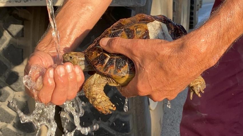 Yangında kalan kaplumbağaları kurtardılar