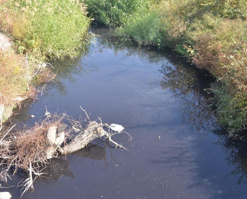 Fabrika atıkları balıkları oksijensiz bıraktı