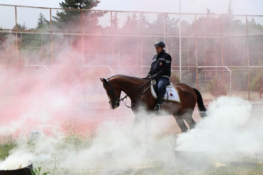 Jandarmanın atları özel görevler için hazırlanıyor