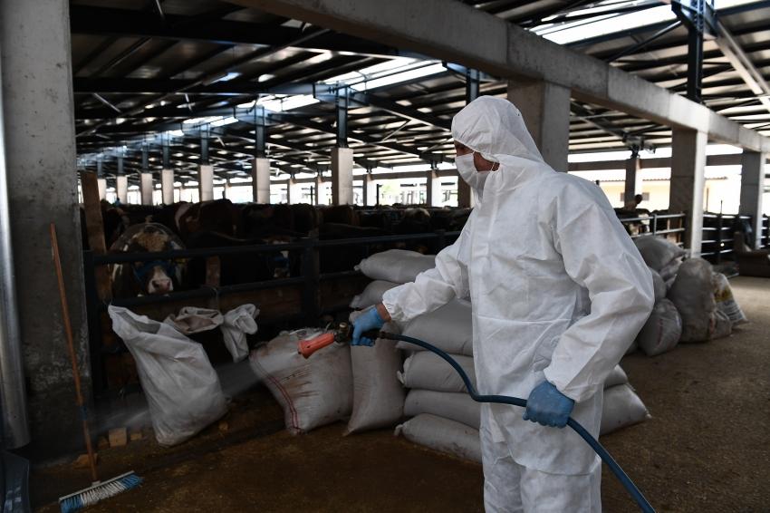 Osmangazi'de kurban satış yerleri ilaçlandı