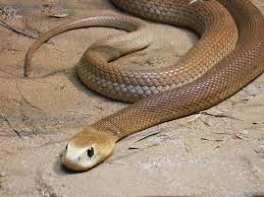 Bursa'da zehirli yılan paniği!