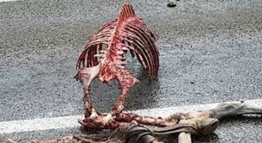 Geriye sadece iskeleti ve derisi kaldı