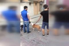 İstanbul'da sokak ortasında gencin içler acısı hali