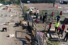 İşte Türkiye'deki köpek gerçeği... Yüzlercesi sokağa terk edildi
