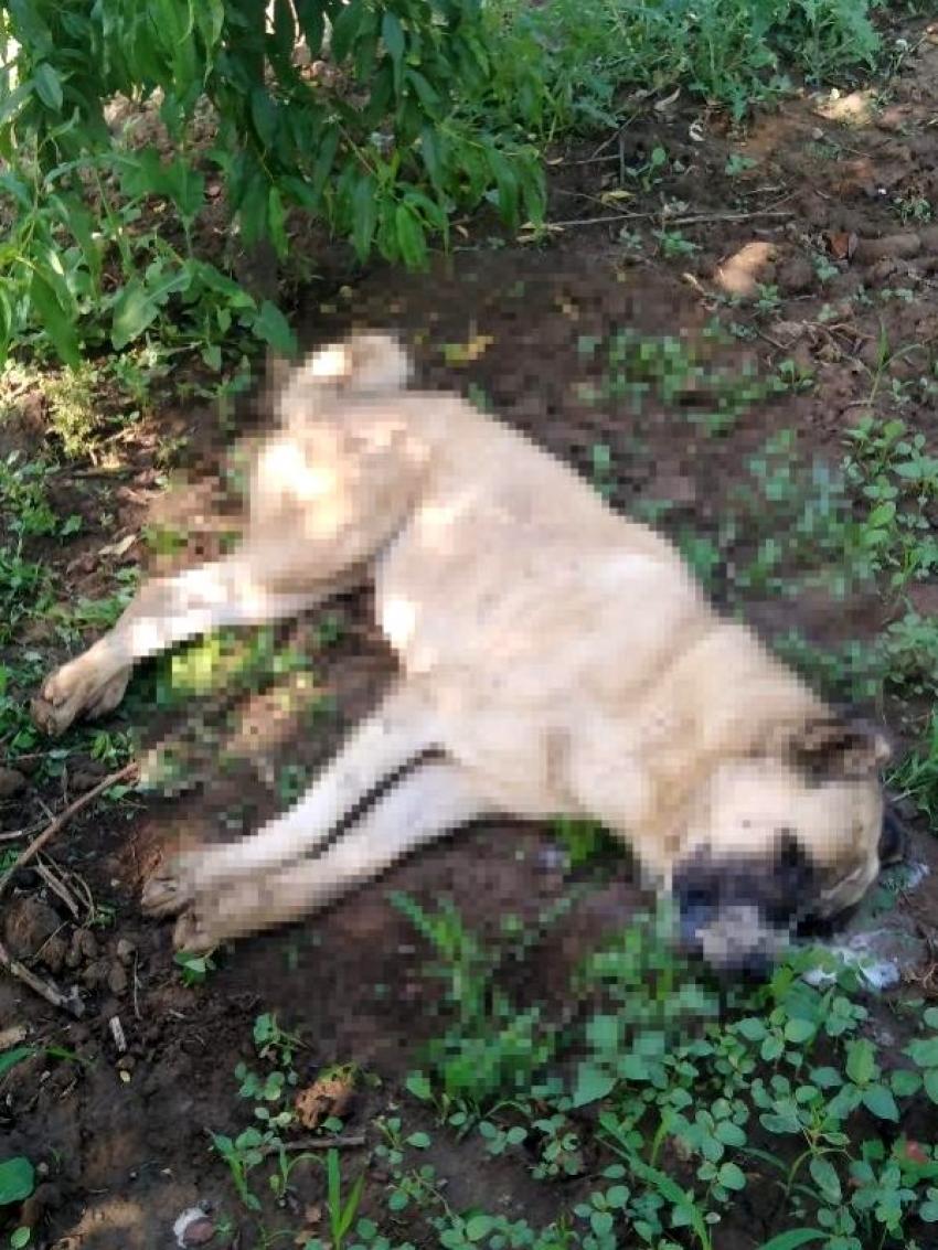 Bursa'da 4 köpek ölü bulundu