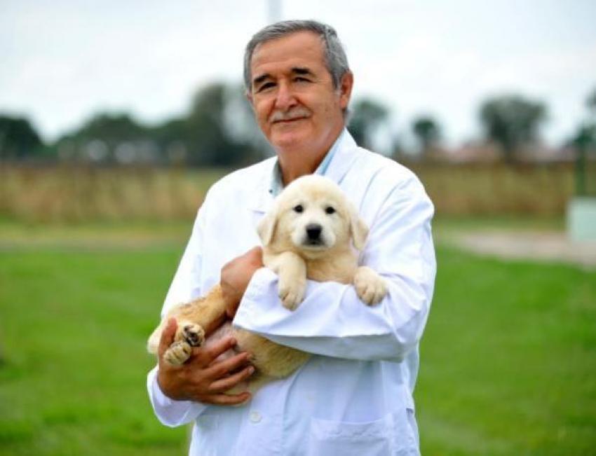 Bursa'da bu köpekleri almak için 1 yıl bekliyorlarlar