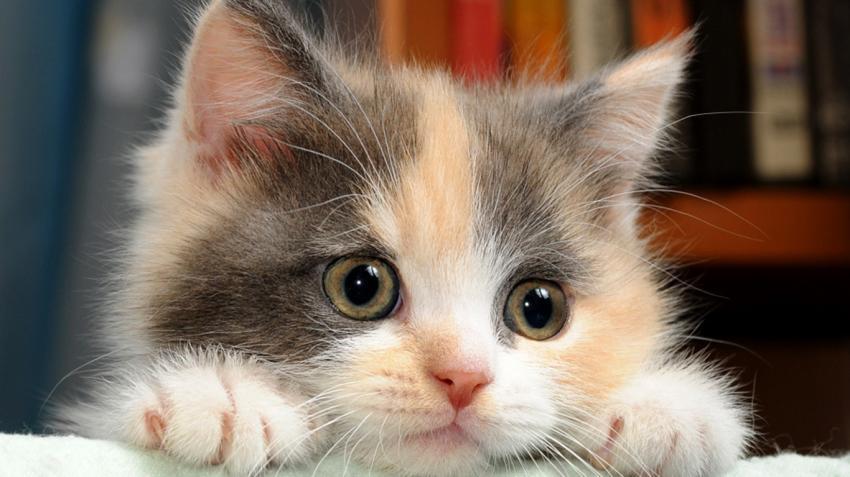 Kedi besleyenler şizofren olabilirsiniz