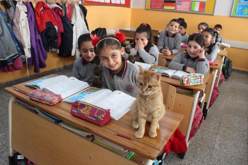Kedi Tombi yeniden okula döndü