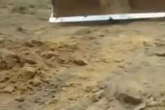 Kepçeyle tarlayı düzeltirken uyuyan yılanı uyandırdılar
