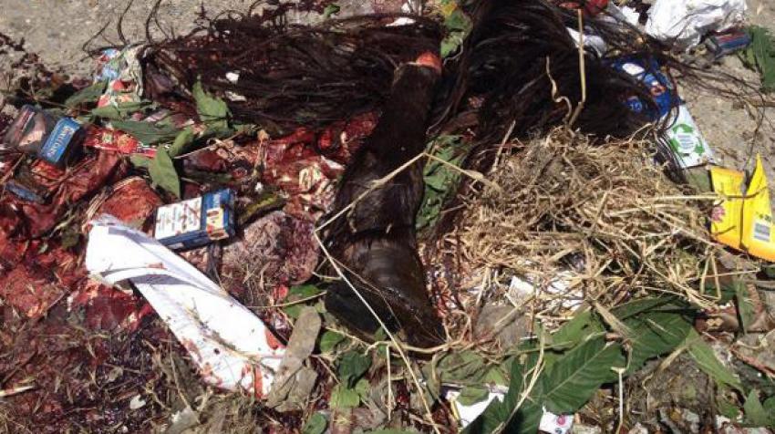 Çöp konteynerindan kesilmiş at parçaları çıktı!