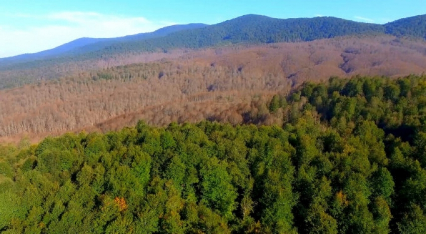 Bursa'da ormanlık alanda bulundu: Değeri 250 bin TL!