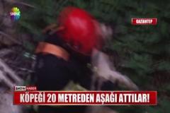 Köpeği 20 metreden aşağı attılar!