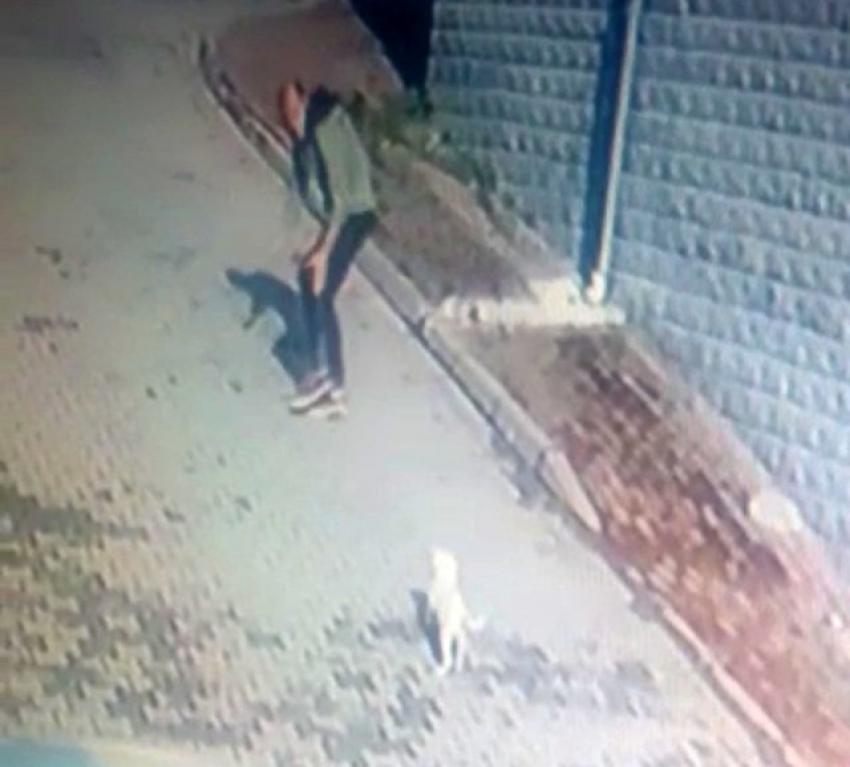 Bursa'da önce köpeği sevdi sonra çaldı