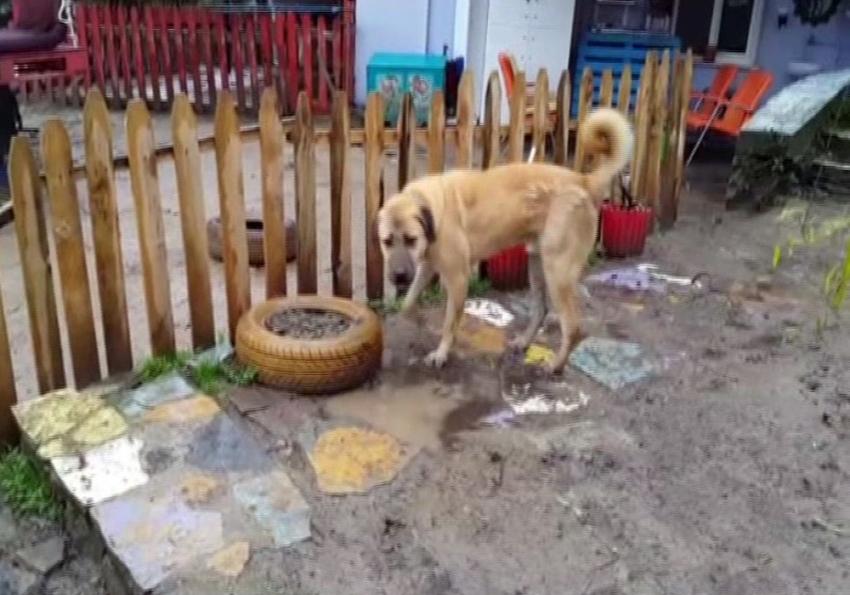 """""""Kuyu"""" Köpek kurtarılmasından bir sene sonra görüntülendi"""