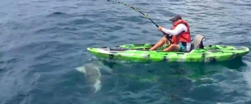 Köpekbalığını avlayayım derken av oluyordu