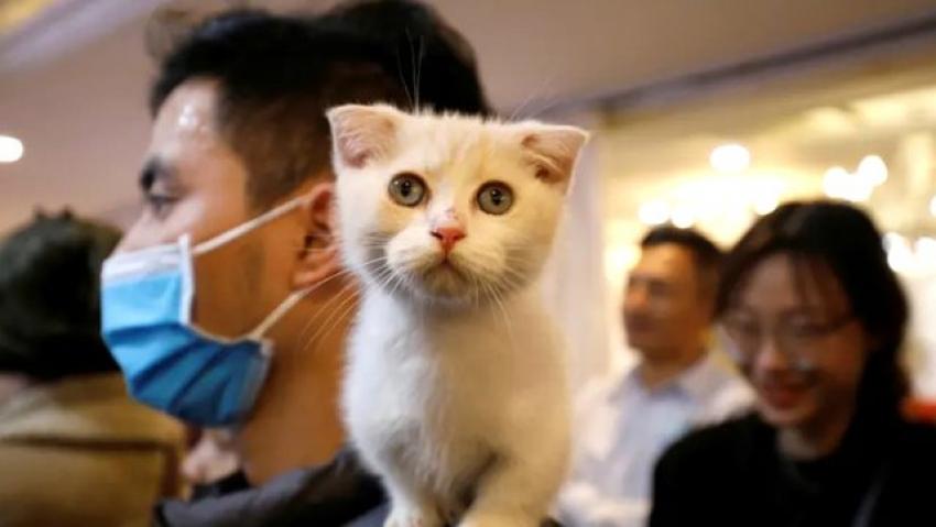 Virüs kedilere bulaşabiliyor!