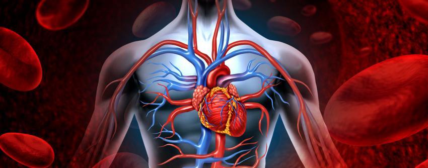 Oruç  koroner kalp hastalıklarını önlüyor
