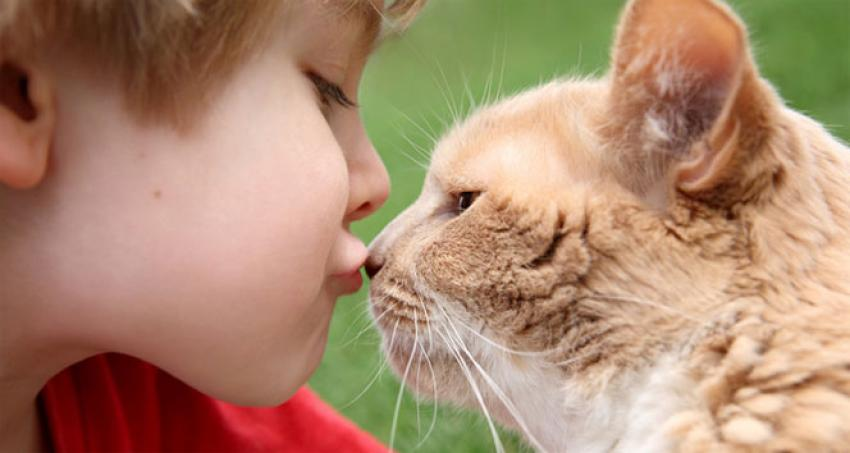 Küçük yaşta kedi beslemek...