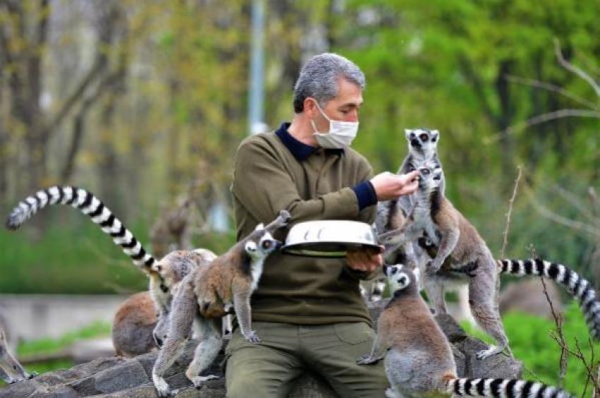 Bursa'da lemurların beslenme anlarında ortaya renkli görüntüler çıktı