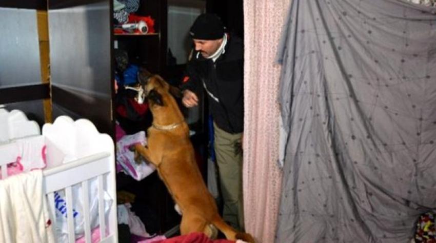 Bursa'da torbacılar köpeği hesaba katmadılar