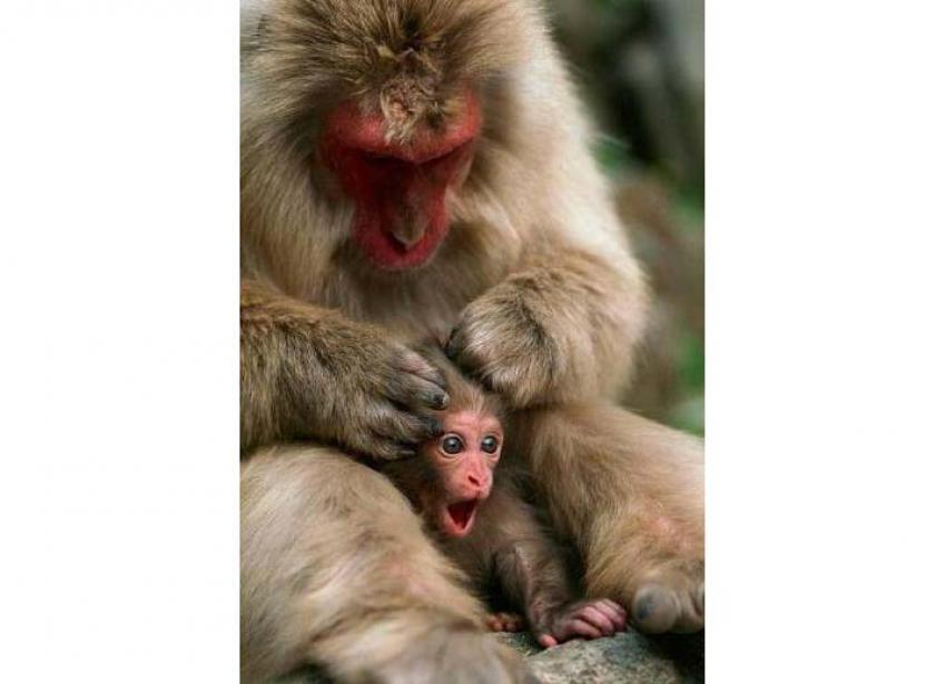 Komik hayvan görüntüleri