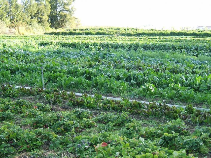 Bursa'da organik tarıma denetim