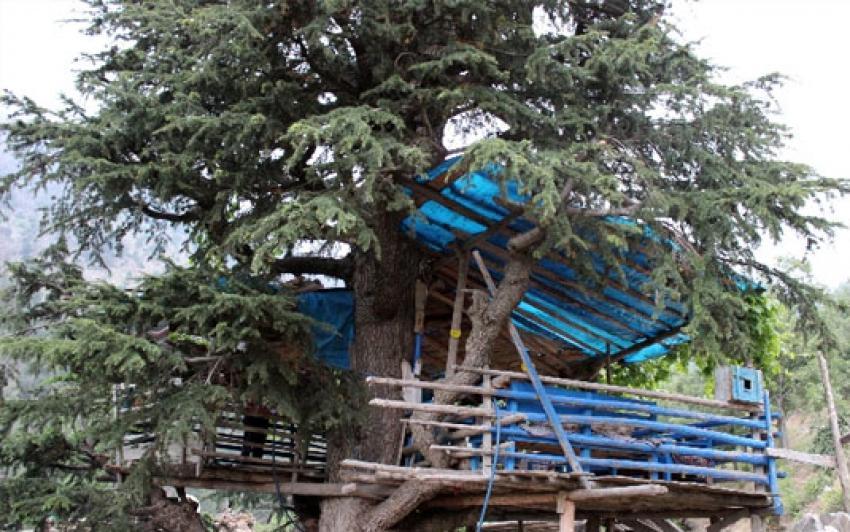 25 yıldır ağaç evde yaşıyor