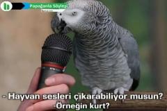 Papağanla Söyleşi