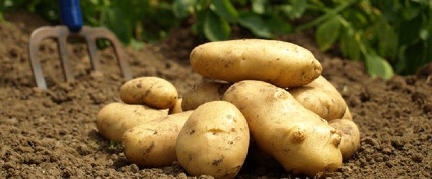Patates fırsatçısına çifte ceza!