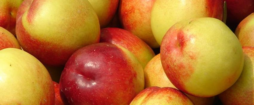 33 ton meyveyi Türkiye'ye iade etti