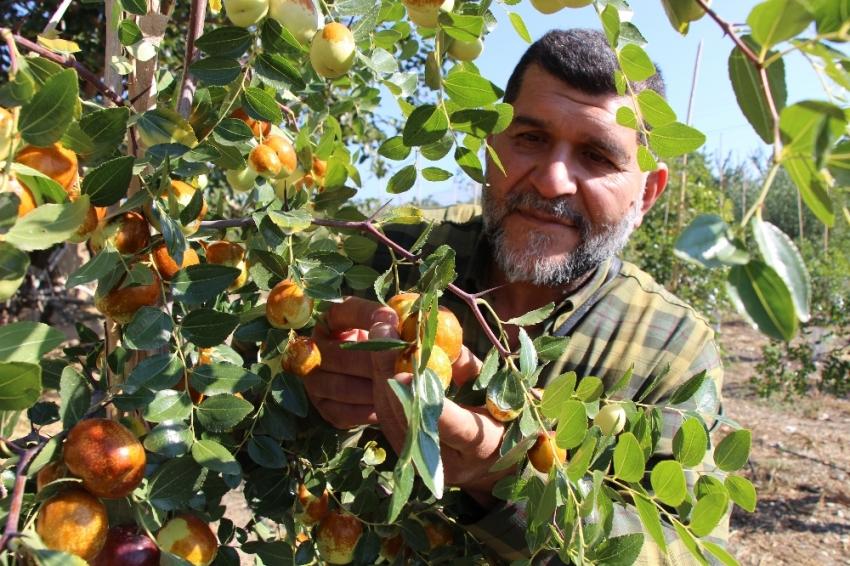 Rüyasında gördüğü meyveden 250 ton üretti