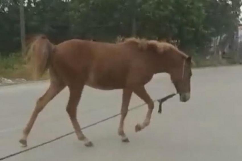 Nilüfer'de başıboş at trafikte tehlike yarattı
