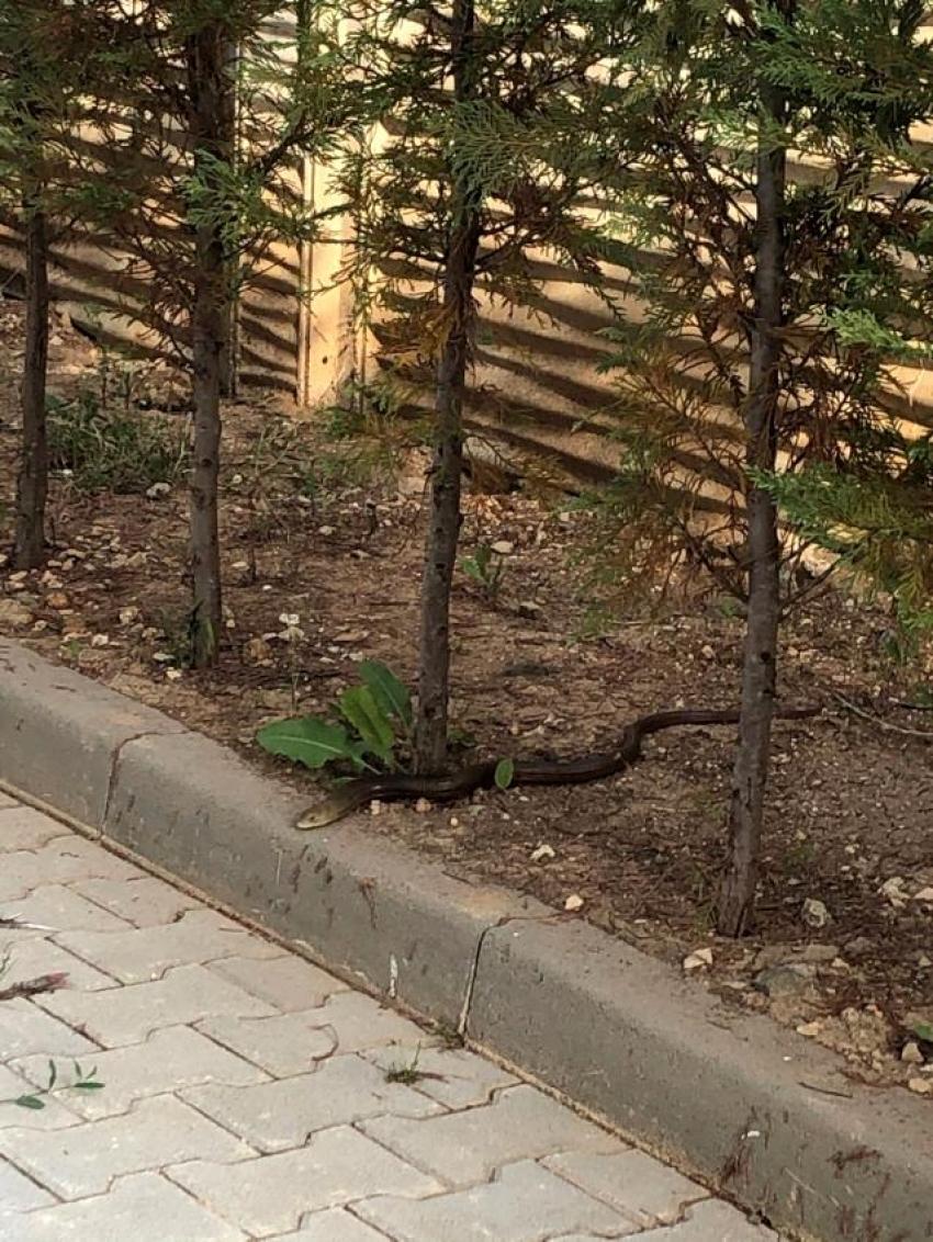 Bursa'da lüks sitede yılan paniği