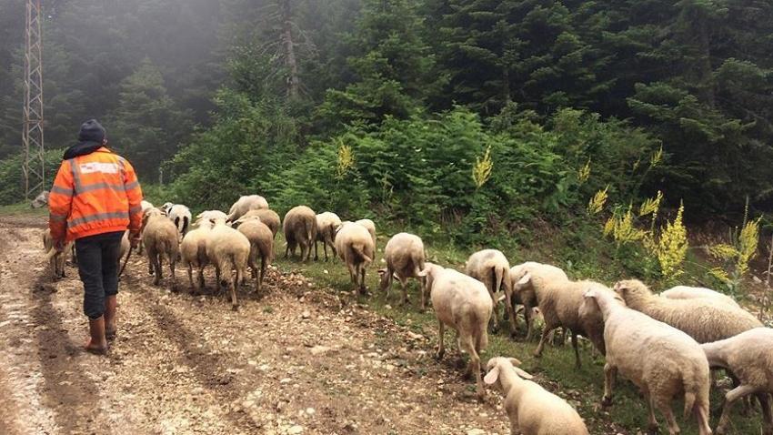 Orman köylülerine 14,5 milyar lira ilave gelir
