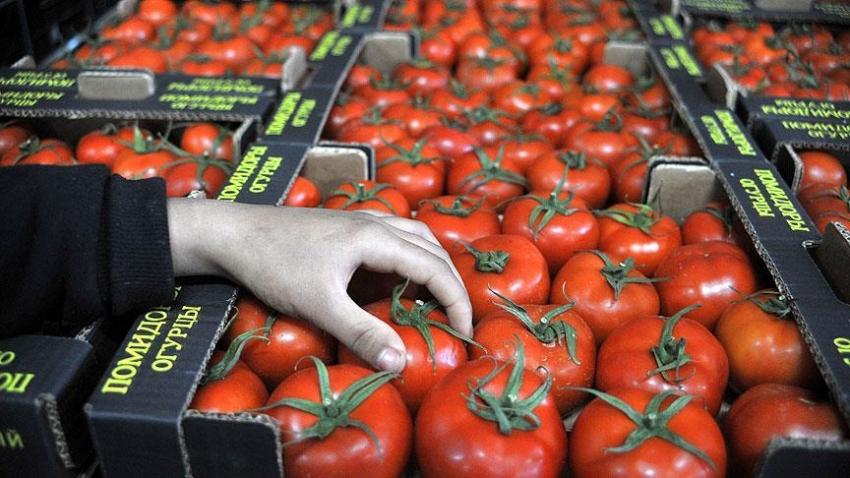Rusya'nın domates ithalatı 1 Kasım'da başlayacak