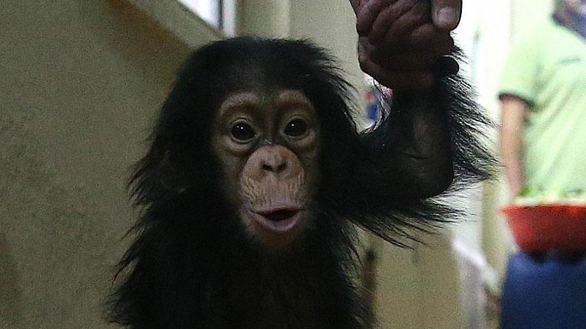 Çinli bilim insanları maymun klonladı
