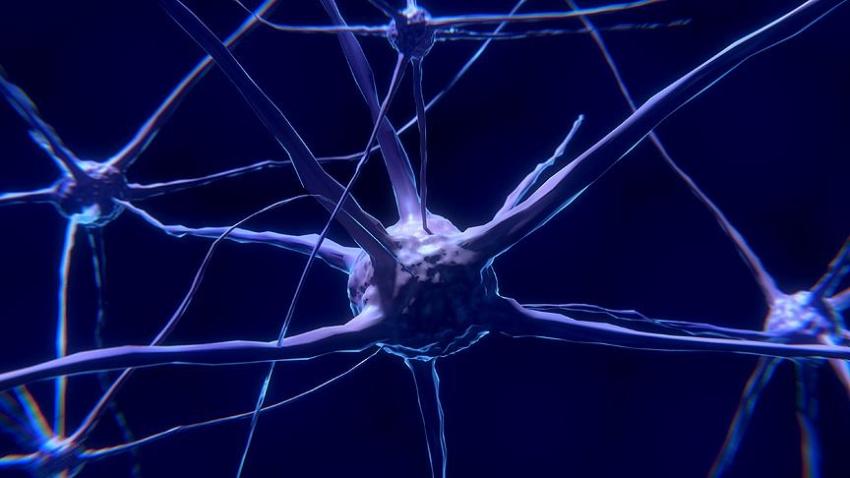 Bilim insanları canlı beyin hücresi modeli oluşturdu