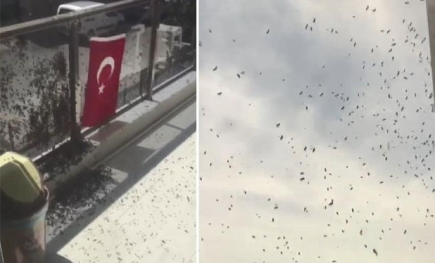 Vatandaşları korkutan arı istilası