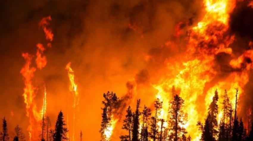 Tüm Türkiye yangınlara kan ağlarken, fırsatçılar yine sahnede
