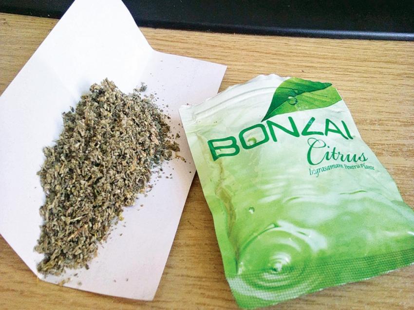 Bonzai Bursa'da hastanelik etti