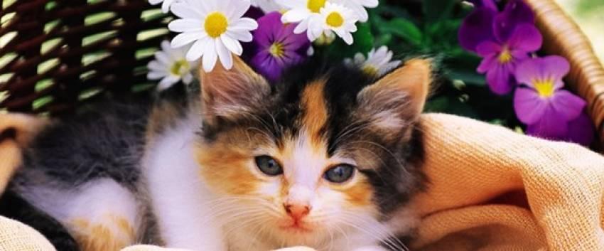 """""""Bazı çiçekler evcil hayvanları zehirleyebilir"""""""