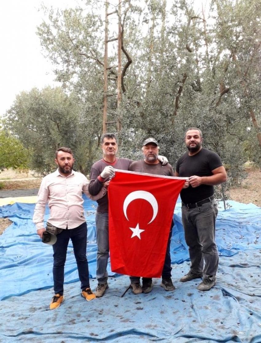 İznik'te zeytin hasadında Cumhuriyet Bayramı kutlaması
