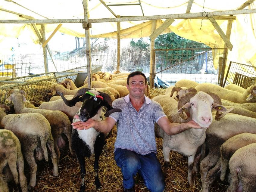 Bursa'da koyunların dilinden anlayan adam